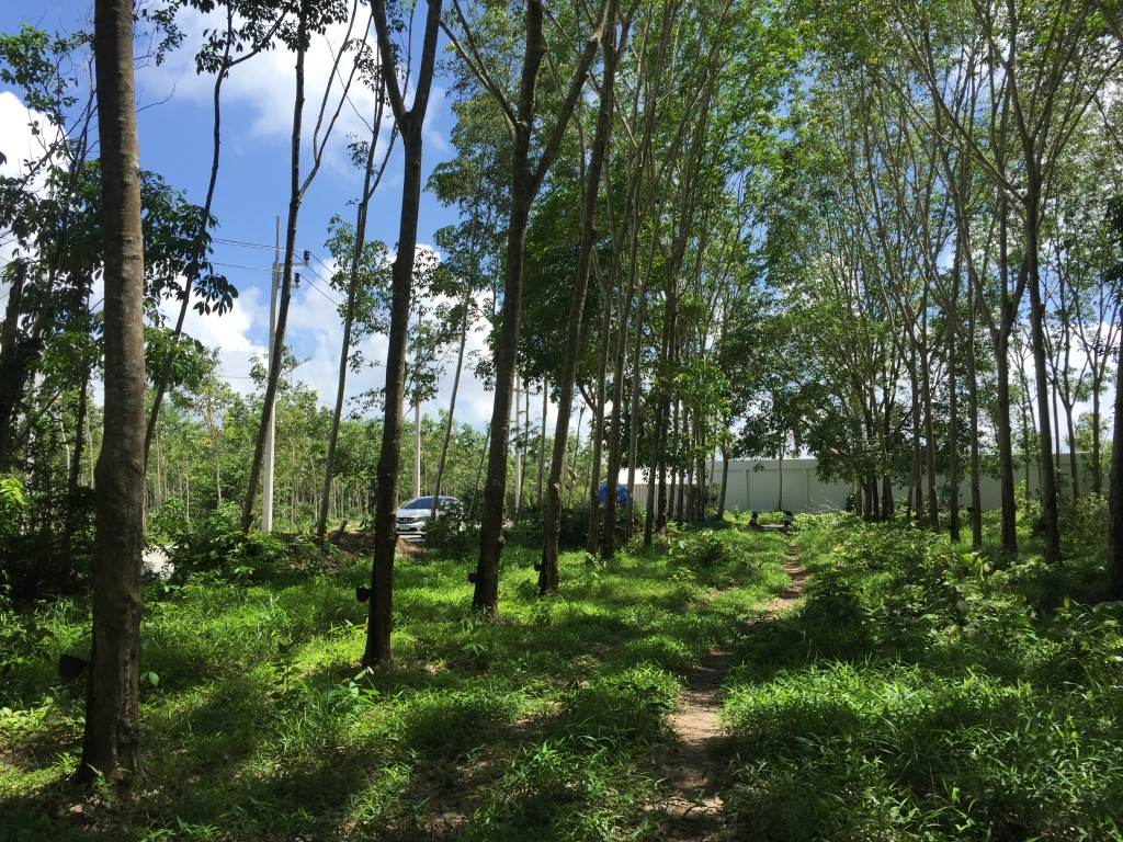 Land for Sale - Laguna